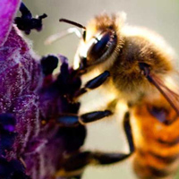 Endowed Professor's Bee-Tracking Research in the News