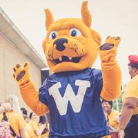 Webster Surpasses Gorloks Now! Crowdfunding Goal